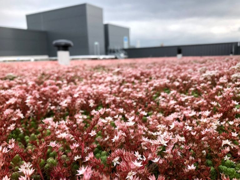 Case study by MOY on the possibilities of Green Roofs on mission critical facilities